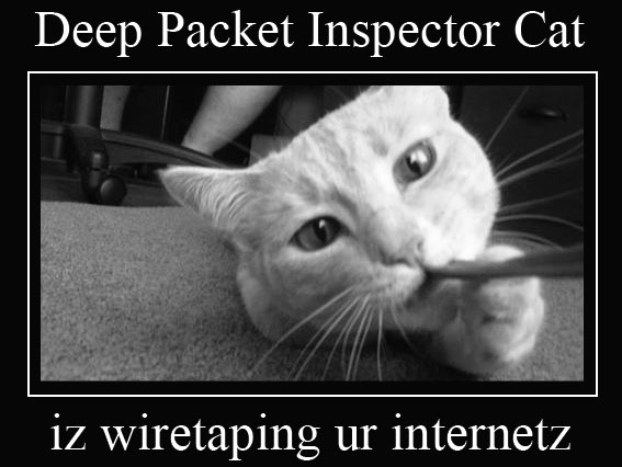 cat-packet-inspector